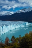 Argentina;Argentine-Patagonia;Argentine-Republic;Argentino-Lake;autuminal;autumn;autumn-colour;autumn-colours;autumnal;beech;beech-tree;beech-trees;beeches;Canal-de-los-Tempanos;cold;color;colors;colour;colours;crevasse;crevasses;deciduous;fall;Glaciar-Perito-Moreno;glacier;glacier-face;Glacier-National-Park;glacier-terminal-face;glacier-terminus;glaciers;gold;golden;ice;Iceberg-Channel;icefield;icefields;icy;Lago-Argentino;Latin-America;leaf;leaves;lenga;lenga-beech;lengas;Los-Glaciares;Los-Glaciares-N.P.;Los-Glaciares-National-Park;Los-Glaciares-NP;Magellanes-Peninsula;national-park;national-parks;Northofagus;Northofagus-pumilio;NP;orange;park;parks;Parque-Nacional-Los-Glaciares;Patagonia;Patagonian;Peninsula-Magellanes;Perito-Moreno;Perito-Moreno-Glacier;Santa-Cruz-Province;season;seasonal;seasons;South-America;South-Argentina;Southern-Argentina;southern-beech;southern-beeches;Sth-America;terminal-face;terminus;travel;tree;trees;UN-world-heritage-area;UN-world-heritage-site;UNESCO-World-Heritage-area;UNESCO-World-Heritage-Site;united-nations-world-heritage-area;united-nations-world-heritage-site;world-heritage;world-heritage-area;world-heritage-areas;World-Heritage-Park;World-Heritage-site;World-Heritage-Sites;yellow