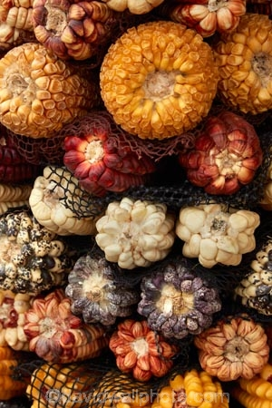 Andean-corn;Andean-maize;Central-Market;cob;cobs;commerce;commercial;corn;corn-cob;corn-cobs;Cusco;Cuzco;farmer-market;farmer-markets;farmers-market;farmers-markets;farmers-market;farmers-markets;food;food-market;food-markets;food-stall;food-stalls;Incan-corn;Incan-maize;kernels;Latin-America;maize;maize-cob;maize-cobs;market;market-day;market-days;market-place;market_place;marketplace;markets;Mercardo-Central;Mercardo-Central-de-San-Pedro;Peru;Peruvian-corn;produce;produce-market;produce-markets;product;products;Republic-of-Peru;retail;retailer;retailers;San-Pedro;San-Pedro-Food-Market;San-Pedro-Market;San-Pedro-Produce-Market;shop;shopping;shops;South-America;stall;stalls;steet-scene;Sth-America;street-scenes