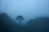ancient;ancient-culture;archaeology;attraction;Camino-Inca;Camino-Inka;Cusco-Region;destination;heritage;historic;history;Inca;Inca-Citadel;Inca-City;Inca-Ruins;Inca-site;Inca-Trail;Inka;Latin-America;lost-city;Machu-Picchu;Machu-Pichu;Machupicchu-District;Peru;rain;raining;rainy;Republic-of-Peru;ruin;ruins;Sacred-Valley;Sacred-Valley-of-the-Incas;South-America;Sth-America;tourist-attraction;tourist-site;tourist-sites;tree;trees;UN-world-heritage-area;UN-world-heritage-site;UNESCO-World-Heritage-area;UNESCO-World-Heritage-Site;united-nations-world-heritage-area;united-nations-world-heritage-site;Urubamba-Province;Urubamba-Valley;wet;world-heritage;world-heritage-area;world-heritage-areas;World-Heritage-Park;World-Heritage-site;World-Heritage-Sites