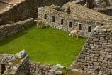 anamal;ancient;ancient-culture;archaeology;attraction;block;blocks;building;buildings;camelid;camelids;Camino-Inca;Camino-Inka;Cusco-Region;destination;domestic-stock;heritage;historic;historic-building;historic-buildings;historical;historical-building;historical-buildings;history;Inca;Inca-Citadel;Inca-City;Inca-masonry;Inca-Ruins;Inca-site;inca-stone-wall;Inca-Stonework;Inca-Trail;Inka;Lama;Lama-Glama;lamoids;Latin-America;Llama;Llamas;lost-city;Machu-Picchu;Machu-Pichu;Machupicchu-District;masonry;old;Peru;Republic-of-Peru;rock-wall;ruin;ruins;Sacred-Valley;Sacred-Valley-of-the-Incas;South-America;Sth-America;stock;stone-block;stone-blocks;stone-masonry;stone-wall;stone-walls;tourist-attraction;tourist-site;tourist-sites;tradition;traditional;UN-world-heritage-area;UN-world-heritage-site;UNESCO-World-Heritage-area;UNESCO-World-Heritage-Site;united-nations-world-heritage-area;united-nations-world-heritage-site;Urubamba-Province;Urubamba-Valley;world-heritage;world-heritage-area;world-heritage-areas;World-Heritage-Park;World-Heritage-site;World-Heritage-Sites