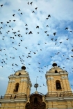 1672;bell-tower;bell-towers;bird;birds;building;buildings;christian;christianity;church;churches;Convento-de-San-Francisco;faith;fly;flying;heritage;historic;historic-building;historic-buildings;Historic-centre-of-Lima;historical;historical-building;historical-buildings;history;Latin-America;Lima;Monastery-of-San-Francisco;old;Peru;pigeon;pigeons;place-of-worship;places-of-worship;religion;religions;religious;Republic-of-Peru;San-Francisco-Church;San-Francisco-Monastery;South-America;Sth-America;tower;towers;tradition;traditional;UN-world-heritage-area;UN-world-heritage-site;UNESCO-World-Heritage-area;UNESCO-World-Heritage-Site;united-nations-world-heritage-area;united-nations-world-heritage-site;world-heritage;world-heritage-area;world-heritage-areas;World-Heritage-Park;World-Heritage-site;World-Heritage-Sites