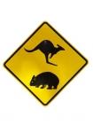 australasia;australia;australian;road-sign;warning;sign;koala;wombat;cutout;yellow