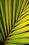 flowers;frond;fronds;icon;icons;native;nature;new-zealand;palms;symbol;symbols