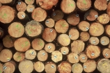 export;exported;exports;industrial;industry;lumber;pattern;patterns;stack;texture;textures;timber;tree;trees;wood