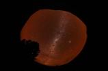 360;360-degree;360-degree-horizon;astronomy;Ben-Ohau;Canterbury;celestial-bodies;constellation;constellations;dark;Dark-cloud-constellation;Dark-cloud-constellations;dark-nebula;dark-sky;evening;extreme-wide-angle;extreme-wide_angle;fish_eye;fish_eye-lens;fish_eyes;fisheye;fisheye-lens;fisheyes;galaxies;galaxy;horizon;interstellar-cloud;Mackenzie-Country;Mackenzie-District;Mackenzie-Region;milky-way;Milky-Way-Galaxy;N.Z.;New-Zealand;night;night-sky;night-time;night_sky;nightsky;NZ;Ohau;planet;planets;S.I.;SI;skies;sky;South-Is;South-Island;space;star;star-gazing;starry;starry-night;starry-sky;stars;Sth-Is;the-Galaxy;The-milky-way;tree;trees;Twizel;wide-angle;wideangle