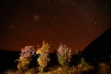 astronomy;autuminal;autumn;autumn-colour;autumn-colours;autumnal;Ben-Ohau;Canterbury;celestial-bodies;color;colors;colour;colours;constellation;constellations;dark;Dark-cloud-constellation;Dark-cloud-constellations;dark-nebula;dark-sky;deciduous;evening;fall;galaxies;galaxy;gold;golden;interstellar-cloud;leaf;leaves;Mackenzie-Country;Mackenzie-District;Mackenzie-Region;milky-way;Milky-Way-Galaxy;N.Z.;New-Zealand;night;night-sky;night-time;night_sky;nightsky;NZ;Ohau;orange-mountain-ash;planet;planets;rowan;S.I.;season;seasonal;seasons;SI;skies;sky;sorbus;South-Is;South-Island;space;star;star-gazing;starry;starry-night;starry-sky;stars;Sth-Is;the-Galaxy;The-milky-way;tree;trees;Twizel;yellow