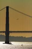 America;American;Bay-Area;birds;birf;bridge;bridges;CA;California;California-SR-1;California-State-Route-1;Golden-Gate;Golden-Gate-strait;Golden-Gate-straits;Icon;Iconic;infrastructure;kite-surfer;kite-surfers;Landmark;Landmarks;road-bridge;road-bridges;San-Francisco;San-Francisco-Bay;San-Francisco-Bay-Area;seagull;seagulls;shimmer;shimmering;States;sun;sunlight;suspension-bridge;suspension-bridges;traffic-bridge;traffic-bridges;transport;U.S.-Route-101;U.S.A;United-States;United-States-of-America;US-101;USA;West-Coast;West-United-States;West-US;West-USA;Western-United-States;Western-US;Western-USA;Wonder-of-the-Modern-World;Wonders-of-the-Modern-World