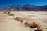 4216;alkalii-flat;america;american;barren;barreness;basin;bush;bushes;CA;california;clay-pan;clay-pans;death;Death-Valley;Death-Valley-N.P.;Death-Valley-National-Park;depression;desert;desert-plant;desert-plants;deserts;desolate;dry;dry-lake;dry-lake-bed;dry-lake-beds;dry-lakes;empty;endorheic-basin;endorheric;endorheric-basin;endorheric-basins;endorheric-lake;extreme;flat;geographic;geography;glare;glary;Great-Basin;International-Biosphere-Reserve;Inyo-County;lake;lake-bed;lake-beds;lakes;mojave;Mojave-Desert;national;national-park;National-parks;pan;Panamint-Range;Panamint-Valley;pans;park;playa;playas;sabkha;saline;salt;salt-crust;salt-flat;salt-flats;salt-lake;salt-lakes;salt-pan;salt-pans;salt_pan;salt_pans;saltpan;saltpans;salty;scrub;states;The-Great-Basin;U.S.A;United-States;United-States-of-America;usa;valley;vast;vlei;west-coast;West-United-States;West-US;West-USA;Western-United-States;Western-US;Western-USA;white;white-surface