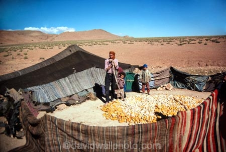 berber;berbers;nomad;nomads;nomadic;tent;tents;sahara;saharan;maroc;marocco;maroccan;africa;north;africa;african;ethnic;tradtion;traditional;culture;cultural;cultures;traditions;native;indigenous;maize;corn;thrash;thresh;cob;cobs;desert;deserts;arid;atlas;atlas-mountains;father;man;men;male;son;child;children;tribal;transient;travel;sons;daughter;daughters;family;families;mother;mothers;fathers