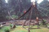 cameroon;camerouns;cameroons;cameroun;bridge;bridges;swing-bridge;rope-bridge;wire-bridge;planks-;cross;river;rivers;long;suspension-bridge;jungle-;rainforest;rain-forest;korup-national-park;africa;african;korup;korup-n.p.