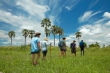 Africa;African;Botswana;guided-walk;guided-walks;Hyphaene-coriacea;Ilala-palm;lala-palm;Okavango;Okavango-Delta;Okavango-Swamp;palm;palm-tree;palm-trees;palms;safari;safaris;Southern-Africa;tourism;tourist;tourists;walks;wallk