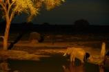 Africa;African-elephant;African-elephants;animal;animals;Botswana;drink;drinking;elephant;Elephants;evening;floodlighting;floodlit;Kasane;Loxodonta-africana;mammal;mammals;national-park;national-parks;natural;nature;night;night-time;pachyderm;pachyderms;reserve;reserves;safari;safaris;Senyati;Senyati-Safari-Camp;Southern-Africa;water;waterhole;waterholes;wild;wilderness;wildlife;wildlife-park;wildlife-parks;wildlife-reserve;wildlife-reserves