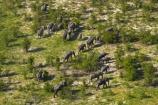 aerial;aerial-image;aerial-images;aerial-photo;aerial-photograph;aerial-photographs;aerial-photography;aerial-photos;aerial-view;aerial-views;aerials;Africa;African-bush-elephant;African-bush-elephants;African-elephant;African-elephants;animal;animals;Botswana;delta;deltas;elephant;elephant-herd;elephants;Endorheic-basin;herd;herd-of-elephant;herds;inland-delta;internal-drainage-systems;Loxodonta-africana;mammal;mammals;Okavango;Okavango-Delta;Okavango-Swamp;pachyderm;pachyderms;river-delta;Seven-Natural-Wonders-of-Africa;Southern-Africa;wildlife