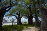 Adansonia;Adansonia-digitata;Africa;Baines-Baobabs;Baines-Baobabs;Baines-Baobabs;baobab;baobab-tree;baobab-trees;baobabs;Botswana;Kudiakam-Pan;Makgadikgadi-Pan;Makgadikgadi-Pans;national-park;national-parks;Nxai-Pan-N.P.;Nxai-Pan-National-Park;Nxai-Pan-NP;remote;remoteness;Southern-Africa;tree;trees;wilderness