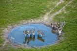 aerial;aerial-image;aerial-images;aerial-photo;aerial-photograph;aerial-photographs;aerial-photography;aerial-photos;aerial-view;aerial-views;aerials;Africa;African;animal;animals;Botswana;Burchells-zebra;delta;deltas;Endorheic-basin;Equus-quagga;Equus-quagga-burchellii;flood-plain;flood-plains;flood_plain;flood_plains;floodplain;floodplains;inland-delta;internal-drainage-systems;mammal;mammals;Okavango;Okavango-Delta;Okavango-Swamp;plain;plains;Plains-zebra;river-delta;safari;safaris;Seven-Natural-Wonders-of-Africa;Southern-Africa;wildlife;Zebra;zerbras