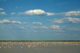 Africa;African;alkalii-flat;Animal;animals;avian;barren;barreness;basin;bird;Bird-Sanctuary;bird-spotting;bird-watching;bird_watching;birds;Botswana;clay-pan;clay-pans;depression;desert;deserts;desolate;dry;dry-lake;dry-lake-bed;dry-lake-beds;dry-lakes;eco-tourism;eco_tourism;ecotourism;empty;endorheric;endorheric-basin;endorheric-basins;endorheric-lake;extreme;Fauna;Flamingo;Flamingoes;flat;geographic;geography;glare;glary;Greater-Flamingo;Greater-Flamingoes;lake;lake-bed;lake-beds;lakes;Lesser-Flamingo;Lesser-Flamingoes;Namibia;Nata;Nata-Bird-Sanctuary;Natural;Nature;Ornithology;pan;pans;Phoeniconaias-minor;Phoenicopterus-roseus;playa;playas;sabkha;safari;safaris;saline;salt;salt-crust;salt-flat;salt-flats;salt-lake;salt-lakes;salt-pan;salt-pans;salt_pan;salt_pans;saltpan;saltpans;salty;Southern-Africa;Sowa-Pan;Sua-Pan;vast;vlei;white;white-surface;wild;wildlife