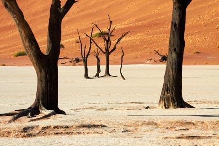900-year-old-trees;Africa;arid;big-dunes;clay-pan;clay-pans;dead-tree;dead-trees;Dead-Vlei;Deadvlei;desert;deserts;dry;dry-lake;dry-lake-bed;dry-lake-beds;dry-lakes;dune;dunes;giant-dune;giant-dunes;giant-sand-dune;giant-sand-dunes;hot;huge-dunes;lake-bed;large-dunes;Namib-Desert;Namib-Naukluft-N.P.;Namib-Naukluft-National-Park;Namib-Naukluft-NP;Namib_Naukluft-N.P.;Namib_Naukluft-National-Park;Namib_Naukluft-NP;Namibia;national-park;national-parks;natural;orange-sand;pan;remote;remoteness;reserve;reserves;salt-pan;salt-pans;sand;sand-dune;sand-dunes;sand-hill;sand-hills;sand_dune;sand_dunes;sand_hill;sand_hills;sanddune;sanddunes;sandhill;sandhills;sandy;Sossusvlei;Southern-Africa;tree-trunk;tree-trunks;vlei;white-clay-pan;wilderness
