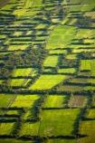 aerial;aerial-image;aerial-images;aerial-photo;aerial-photograph;aerial-photographs;aerial-photography;aerial-photos;aerial-view;aerial-views;aerials;agricultural;agriculture;Asia;Cambodia;country;countryside;crop;crops;farm;farming;farmland;farms;field;fields;flood-plain;flood-plains;floodplain;floodplains;green;grow;horticulture;Indochina-Peninsula;Kampuchea;Kingdom-of-Cambodia;Lower-Mekong-Basin;lush;meadow;meadows;Mekong-Plain;paddock;paddocks;paddy-field;paddy-fields;pasture;pastures;rice-field;rice-fields;rice-growing;rice-paddies;rice-paddy;rice-production;rural;Siem-Reap;Siem-Reap-Province;Southeast-Asia;verdant