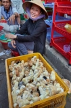 Asia;Asian;Asian-conical-hat;Asian-conical-hats;bird;birds;Can-Duoc;Can-Duoc-Market;commerce;commercial;conical-hat;conical-hats;duck;ducking;ducklings;ducks;farmer-market;farmer-markets;farmers-market;farmers-markets;farmers-market;farmers-markets;female;females;fluffy;food-market;food-markets;food-stall;food-stalls;lady;leaf-hat;leaf-hats;Long-An-Province,;market;market-day;market-days;market-place;market_place;marketplace;markets;Mekong-Delta;Mekong-Delta-Region;non-la;nón-lá;palm_leaf-conical-hat;people;person;produce;produce-market;produce-markets;retail;retailer;retailers;shop;shopping;shops;South-East-Asia;Southeast-Asia;stall;stalls;steet-scene;street-scenes;Vietnam;Vietnamese;Vietnamese-conical-hat;Vietnamese-conical-hats;Vietnamese-hat;Vietnamese-hats;Vietnamese-symbol;woman;women