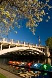 Adelaide;Adelaide-Bridge;Australasian;Australia;Australian;blossom;bridge;bridges;calm;King-William-St-Bridge;King-William-Street-Bridge;lake;Lake-Torrens;lakes;paddle-boat;paddle-boats;peddle-boat;peddle-boats;placid;quiet;reflection;reflections;river;River-Torrens;rivers;S.A.;SA;serene;smooth;South-Australia;spring;spring-time;State-Capital;still;Torrens-Lake;Torrens-River;tranquil;water