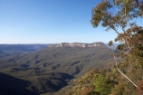 Australasia;Australia;Australian;Blue-Mountains;Blue-Mountains-N.P.;Blue-Mountains-National-Park;Blue-Mountains-NP;Eaglehawk-Lookout;eucalypt;eucalypts;eucalyptus;eucalytis;gum;gum-tree;gum-trees;gums;Jamison-Valley;Katoomba;N.S.W.;New-South-Wales;NSW;tree;trees;UN-world-heritage-site;UNESCO-World-Heritage-Site;united-nations-world-heritage-site;world-heritage;world-heritage-area;world-heritage-areas;World-Heritage-Park;World-Heritage-site;World-Heritage-Sites