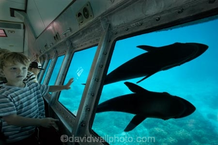 australasian;Australia;australian;Barrier-Reef;cairns;cay;cays;coast;coastal;coastline;coastlines;coasts;coral-cay;coral-cays;coral-reef;coral-reefs;Coral-Sea;dive-site;dive-sites;Ecosystem;Environment;fish;fishes;Glass-Bottomed-Boat;Glass-Bottomed-Boats;Glass_Bottomed-Boat;Glass_Bottomed-Boats;Great-Barrier-Reef;Great-Barrier-Reef-Marine-Park;Green-Is;Green-Is-NP;Green-Is.;green-island;Green-Island-N.P.;Green-Island-National-Park;Green-Island-NP;Green-Island-Resort;holiday;holiday-destination;holiday-destinations;Holidays;marine-environment;North-Queensland;ocean;oceans;Qld;queensland;reef;reefs;sand-cay;sand-cays;sea;seas;Semi-Sub;Semi-Submarine;Semi-Submarines;Semi-Subs;Semi_Sub;Semi_Submarine;Semi_Submarines;Semi_Subs;SemiSub;SemiSubmarine;SemiSubmarines;SemiSubs;shore;shoreline;shorelines;Shores;south-pacific;Suckerfish;tasman-sea;tourism;travel;Tropcial-North-Queensland;tropical;tropical-reef;tropical-reefs;underwater;underwater-photo;underwater-photography;underwater-photos;UNESCO-World-Heritage-Site;Vacation;Vacations;water;Wiorld-Heritage-Site;world-heritage-area;World-Heritage-Park;world-heritage-site