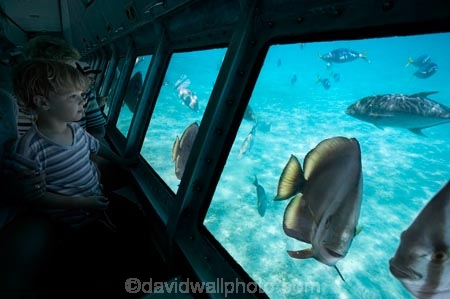 australasian;Australia;australian;Barrier-Reef;cairns;cay;cays;coast;coastal;coastline;coastlines;coasts;coral-cay;coral-cays;coral-reef;coral-reefs;Coral-Sea;dive-site;dive-sites;Ecosystem;Environment;fish;fishes;Glass-Bottomed-Boat;Glass-Bottomed-Boats;Glass_Bottomed-Boat;Glass_Bottomed-Boats;Great-Barrier-Reef;Great-Barrier-Reef-Marine-Park;Green-Is;Green-Is-NP;Green-Is.;green-island;Green-Island-N.P.;Green-Island-National-Park;Green-Island-NP;Green-Island-Resort;holiday;holiday-destination;holiday-destinations;holidaying;holidays;marine-environment;North-Queensland;ocean;oceans;Qld;queensland;reef;reefs;sand-cay;sand-cays;sea;seas;Semi-Sub;Semi-Submarine;Semi-Submarines;Semi-Subs;Semi_Sub;Semi_Submarine;Semi_Submarines;Semi_Subs;SemiSub;SemiSubmarine;SemiSubmarines;SemiSubs;shore;shoreline;shorelines;Shores;south-pacific;tasman-sea;tourism;tourist;tourists;travel;traveler;traveling;traveller;travelling;Tropcial-North-Queensland;tropical;tropical-reef;tropical-reefs;underwater;underwater-photo;underwater-photography;underwater-photos;UNESCO-World-Heritage-Site;vacation;vacationers;vacationing;Vacations;water;Wiorld-Heritage-Site;world-heritage-area;World-Heritage-Park;world-heritage-site