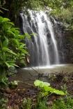 Atherton-Tableland;Atherton-Tablelands;Australasian;Australia;Australian;cascade;cascades;creek;creeks;Elinjaa-Falls;Elinjaa-Waterfall;Elinjaa-Waterfalls;falls;Millaa-Millaa;natural;nature;North-Queensland;Qld;Queensland;scene;scenic;stream;streams;tropical-rainforest;tropical-rainforests;water;water-fall;water-falls;waterfall;waterfalls;wet