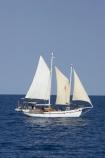Australasian;Australia;Australian;blue;boat;boats;Coral-Sea;main-sail;Malaita;mast;masts;North-Queensland;ocean;Port-Douglas;Qld;Queensland;sail;sails;sea;sky;spinnaker;Tropcial-North-Queensland;water;white;yacht;yachts