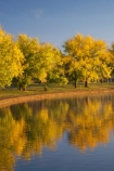 A.C.T.;ACT;Australia;Australian-Capital-Territory;autuminal;autumn;autumn-colour;autumn-colours;autumnal;Barton;Bowen-Park;calm;Canberra;capital;capitals;color;colors;colour;colours;deciduous;East-Basin;fall;lake;Lake-BG;Lake-Burley-Griffin;lakes;leaf;leaves;park;parks;placid;quiet;reflection;reflections;season;seasonal;seasons;serene;smooth;still;tranquil;tree;trees;water