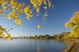 A.C.T.;ACT;adventure;air;Australia;Australian-Capital-Territory;autuminal;autumn;autumn-colour;autumn-colours;autumnal;aviation;balloon;ballooning;balloons;Barton;Bowen-Park;Canberra;capital;capitals;color;colorful;colors;colour;colourful;colours;deciduous;East-Basin;fall;flight;float;floating;fly;flying;hot-air-balloon;hot-air-ballooning;hot-air-balloons;hot_air-balloon;hot_air-ballooning;hot_air-balloons;hotair-balloon;hotair-balloons;lake;Lake-BG;Lake-Burley-Griffin;lakes;leaf;leaves;mid-air;mid_air;park;parks;season;seasonal;seasons;sport;sports;tourism;transport;transportation;tree;trees;water