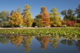 A.C.T.;ACT;Australia;Australian-Capital-Territory;autuminal;autumn;autumn-colour;autumn-colours;autumnal;calm;Canberra;capital;capitals;color;colors;colour;colours;Commonwealth-Park;deciduous;fall;leaf;leaves;Nerang-Pool;park;parks;placid;pond;ponds;quiet;reflection;reflections;season;seasonal;seasons;serene;smooth;still;Swamp-Cypress;Taxodium-distichum;tranquil;tree;trees;water