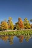 A.C.T.;ACT;Australia;Australian-Capital-Territory;autuminal;autumn;autumn-colour;autumn-colours;autumnal;calm;Canberra;capital;capitals;color;colors;colour;colours;Commonwealth-Park;deciduous;fall;leaf;leaves;Nerang-Pool;park;park-bench;park-benches;parks;placid;pond;ponds;quiet;reflection;reflections;season;seasonal;seasons;serene;smooth;still;Swamp-Cypress;Taxodium-distichum;tranquil;tree;trees;water