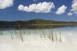 australasia;Australia;australian;beach;beaches;bush;clear-water;cloud;clouds;Fraser-Island;great-sandy-n.p.;great-sandy-national-park;great-sandy-np;islands;lake;Lake-Birrabeen;lakes;native-bush;perched-lake;perched-lakes;queensland;reed;reeds;UN-world-heritage-site;united-nations-world-heritage-s;water;white-sand;white-sands;world-heritage;World-Heritage-site