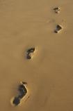 australasia;Australia;bare-feet;bare-foot;beach;beaches;coast;coastal;direction;early-light;foot-print;foot-prints;foot-step;foot-steps;footprint;footprints;footstep;footsteps;freedom;Gold-Coast;holiday;holidays;queensland;sand;sandy;surfers-paradise;tourism;travel;vacation;vacations