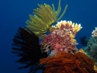 Agincourt-Reef;Agincourt-Reefs;Australasian;Australia;Australian;Barrier-Reef;coral-reef;coral-reefs;Coral-Sea;crinoids;dive-site;dive-sites;diving;ecosystem;environment;Feather-Star;Feather-Stars;Great-Barrier-Reef;Great-Barrier-Reef-Marine-Park;marine;marine-environment;marine-life;marinelife;North-Queensland;Ocean;oceanlife;Oceans;Qld;Queensland;reef;reefs;ribbon-reef;ribbon-reefs;ribbonreef;ribbonreefs;scuba-diving;Sea;sealife;Seas;South-Pacific;Tasman-Sea;Tropcial-North-Queensland;tropical-reef;tropical-reefs;under-water;under_water;undersea;underwater;underwater-photo;underwater-photography;underwater-photos;UNESCO-World-Heritage-Site;Wiorld-Heritage-Site;World-Heritage-Area;World-Heritage-Park