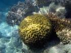 Australasian;Australia;australian;Barrier-Reef;cay;cays;coasts;coral;coral-cay;coral-cays;coral-reef;coral-reefs;Coral-Sea;dive-site;dive-sites;diving;Ecosystem;Environment;Great-Barrier-Reef;Great-Barrier-Reef-Marine-Park;Low-Is;Low-Is.;Low-Island;Low-Islands;Low-Isles;marine;marine-environment;marine-life;marinelife;North-Queensland;ocean;oceanlife;Oceans;Qld;queensland;reef;reefs;sand-cay;sand-cays;scuba-diving;sea;sealife;Seas;snorkeling;South-Pacific;tasman-sea;Tropcial-North-Queensland;tropical;tropical-reef;tropical-reefs;under-water;under_water;undersea;underwater;underwater-photo;underwater-photography;underwater-photos;UNESCO-World-Heritage-Site;water;Wiorld-Heritage-Site;world-heritage-area;World-Heritage-Park;world-heritage-site