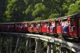 australasia;Australia;australian;bridge;bridges;bush;carriage;carriages;children;Dandenong-Ranges;dandenongs;eucalypt;eucalypts;eucalyptus-trees;eucalyptus-treet;excursion;forest;forests;gum-trees;Melbourne;native-bush;native-trees;passenger;passenger-train;passenger-trains;passengers;Puffing-Billy-Steam-Train;rail;railroad;railroads;rails;railway;railways;tourism;tourist;tourist-train;tourist-trains;tourists;track;tracks;train;trains;transport;transportation;tree;trees;trip;viaduct;viaducts;Victoria;wagon;wagons;wooden-bridge;wooden-bridges;wooden-viaduct;wooden-viaducts