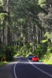 australasia;Australia;australian;bend;bends;bush;car-cars;centre-line;centre-lines;centre_line;centre_lines;centreline;centrelines;corner;corners;Dandenong-Ranges;dandenongs;driving;eucalypt;eucalypts;eucalyptus-trees;forest;forests;gum-trees;highway;highways;Melbourne;native-bush;native-trees;open-road;open-roads;red-car;red-cars;road;road-trip;roads;straight;traffic;transport;transportation;travel;traveling;travelling;tree;trees;trip;Victoria