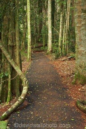 Australasian;Australia;Australian;Central-Eastern-Rainforest-Reserves;Dorrigo-N.P.;Dorrigo-National-Park;Dorrigo-NP;Dorrigo-Rainforest;forest;forests;Gondwana-Rainforests-of-Australia;Mid-North-Coast;Mid-North-Coast-NSW;Mid-North-Nsw;Mid-Northern-NSW;N.S.W.;New-South-Wales;NSW;rainforest;rainforests;track;tracks;walking-track;walking-tracks;Waterfall-Way;Wonga-Track;Wonga-Walk;Wonga-Walk-Track;Wonga-Walking-Track;World-Heritage-Site