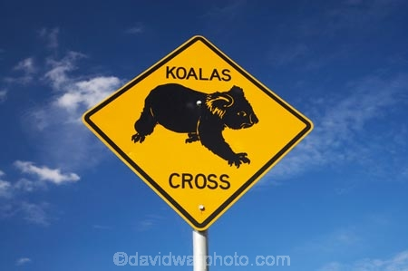 australasia;Australasian;Australia;australian;blue;Koala;Koala-Cross;Koala-Crossing;Koala-Crossing-Sign;Koala-Warning-Sign;koalas;Mid-North-Coast;Mid-North-Coast-NSW;Mid-North-Nsw;Mid-Northern-NSW;N.S.W.;natural;nature;New-South-Wales;NSW;Road;road-sign;road-signs;road_sign;road_signs;roads;roadsign;roadsigns;sign;signs;symbol;symbols;tranportation;transport;travel;warn;Wingham;yellow