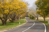 Australasian;Australia;Australian;avenue;avenues;Bellingen;bend;bends;centre-line;centre-lines;centre_line;centre_lines;centreline;centrelines;corner;corners;curve;curves;driving;highway;highways;Mid-North-Coast;Mid-North-Coast-NSW;Mid-North-Nsw;Mid-Northern-NSW;N.S.W.;New-South-Wales;NSW;open-road;open-roads;road;road-trip;roads;spring-time;straight;transport;transportation;travel;traveling;travelling;trip;Waterfall-Way;Yellow-Spring-Leaves