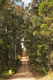 Australasian;Australia;Australian;countryside;Cowarra-Access-Road;eucalypt;Eucalypt-Forest;eucalypts;eucalyptus;eucalytis;forests;gravel-road;gravel-roads;gum;gum-forest;gum-tree;gum-trees;gums;metal-road;metal-roads;metalled-road;metalled-roads;Mid-North-Coast;Mid-North-Coast-NSW;Mid-North-Nsw;Mid-Northern-NSW;N.S.W.;New-South-Wales;NSW;road;roads;rural;tree;trees;Wauchop