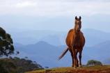 animal;animals;Australasian;Australia;Australian;Colling-Rd;Colling-Road;Elands;equestrian;farm;farms;horse;horses;N.S.W.;New-South-Wales;NSW;view;views