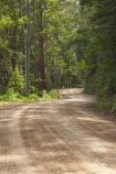 Australasian;Australia;Australian;Boorganna;bush;Colling-Rd;Colling-Road;countryside;Elands;eucalypt;eucalypts;eucalyptus;Eucalyptus-Trees;eucalytis;forest;forests;gravel-road;gravel-roads;Greater-Taree-Region;gum;gum-tree;gum-trees;gums;metal-road;metal-roads;metalled-road;metalled-roads;Mid-North-Coast;Mid-North-Coast-NSW;Mid-North-Nsw;Mid-Northern-NSW;N.S.W.;New-South-Wales;NSW;road;roads;rural;tree;trees