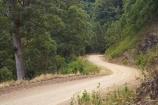 Australasian;Australia;Australian;Boorganna;bush;Comboyne-Rd;Comboyne-Road;countryside;Elands;eucalypt;eucalypts;eucalyptus;Eucalyptus-Trees;eucalytis;forest;forests;gravel-road;gravel-roads;Greater-Taree-Region;gum;gum-tree;gum-trees;gums;metal-road;metal-roads;metalled-road;metalled-roads;Mid-North-Coast;Mid-North-Coast-NSW;Mid-North-Nsw;Mid-Northern-NSW;N.S.W.;New-South-Wales;NSW;road;roads;rural;tree;trees