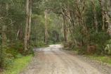 Australasian;Australia;Australian;bush;countryside;eucalypt;eucalypts;eucalyptus;Eucalyptus-Trees;eucalytis;forest;forests;gravel-road;gravel-roads;gum;gum-tree;gum-trees;gums;metal-road;metal-roads;metalled-road;metalled-roads;Mid-North-Coast;Mid-North-Coast-NSW;Mid-North-Nsw;Mid-Northern-NSW;Myall-Lake;N.S.W.;New-South-Wales;NSW;road;roads;rural;Track;tree;trees
