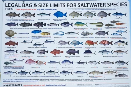 Fishing Guide Clyde River Batemans Bay Southern New South Wales