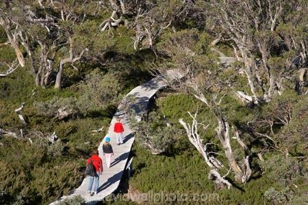 alpine;Australia;boy;boys;Charlotte-Pass;child;children;eucalypt;eucalypts;eucalyptus;eucalytis;families;family;girl;girls;gum;gum-tree;gum-trees;gums;Kangaroo-Ridge;Kosciuszko-N.P.;Kosciuszko-National-Park;Kosciuszko-NP;mountains;N.S.W.;New-South-Wales;NSW;people;person;snow-gum;snow-gums;Snow-Gums-Board-Walk;Snowy-Mountains;South-New-South-Wales;Southern-New-South-Wales;tourism;tourist;tourists;tree;trees;walker;walkers