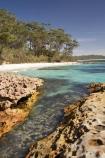 A.C.T.;ACT;aqua;aquamarine;Australasia;Australia;Australian-Capital-Territory;beach;beaches;blue;Booderee-N.P.;Booderee-National-Park;Booderee-NP;Bristol-Point;clean-water;clear-water;coast;coastal;coastline;coastlines;coasts;cobalt-blue;eucalypt;eucalypts;eucalyptus;eucalytis;foreshore;Green-Patch-Beach;Greenpatch-Beach;gum;gum-tree;gum-trees;gums;Jervis-Bay;Jervis-Bay-Territory;N.S.W.;New-South-Wales;NSW;ocean;oceans;sand;sandy;sea;seas;shore;shoreline;shorelines;shores;South-New-South-Wales;Southern-New-South-Wales;tree;trees;turquoise;water